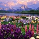 Алпийски цветя