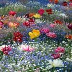 Градина с нежни цветя