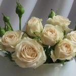 Кремави рози